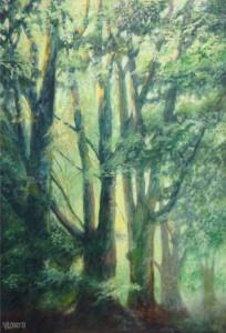 Beukenbomen – Hans van der Vloed