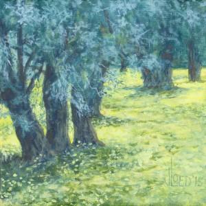 Oude olijfbomen - Hans van der Vloed
