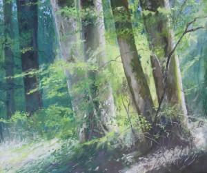 Forêt de Tronçais - Hans van der Vloed