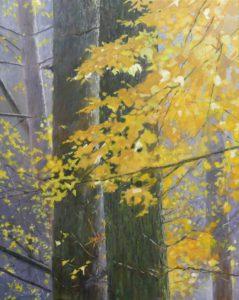 Zeister bos, herfst en zonlicht - Hans van der Vloed